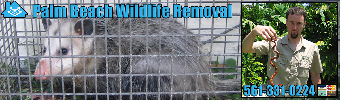 Palm Beach Wildlife and Animal Removal